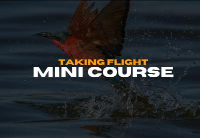 Taking flight bird photography course