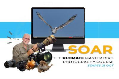 Soar Master Bird Photography Course